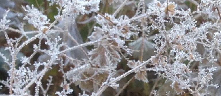 blo-Pflanzen Januar 1a